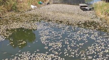 Χιλιάδες νεκρά ψάρια στη διώρυγα της Κλεοπάτρας