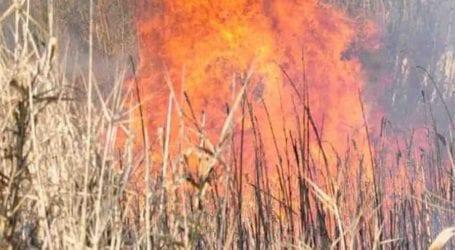 Φωτιά σε έκταση με καλαμιές στον Ριζόμυλο