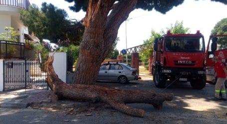 Μεγάλο κλαδί έκοψε την κυκλοφορία στο Καραγάτς