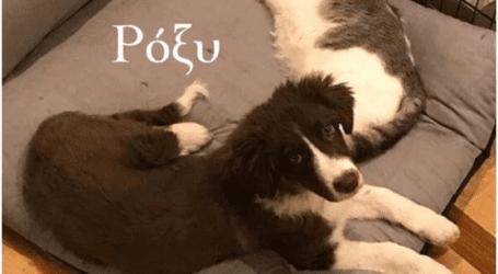 Αποχαιρετισμός στο δολοφονημένο σκυλάκι