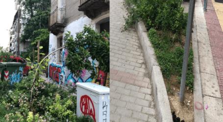 Καταγγελία: Οι κατσαρίδες κάνουν «πάρτι» στο κέντρο της Λάρισας και τα παρτέρια μετατράπηκαν σε τουαλέτες για κατοικίδια (φωτο)