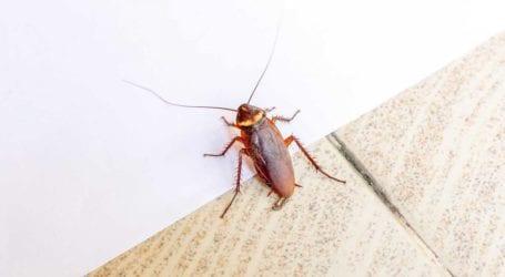 Αλωνίζουν οι κατσαρίδες στον Βόλο – Ψεκασμούς ζητούν οι κάτοικοι