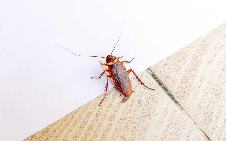 cockroach valentines EXES0119 1