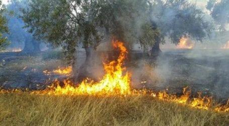 Πυρκαγιά στον Αλμυρό: Κάηκαν ελαιόδεντρα