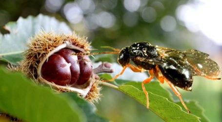 Δήμος Τεμπών: Απάντηση Μανώλη σε Κολλάτο για τη σφήκα καστανιάς