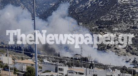 ΤΩΡΑ: Φωτιά σε κατοικημένη περιοχή του Βόλου – Ισχυρές πυροσβεστικές δυνάμεις [εικόνες]