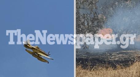 Και πυροσβεστικά αεροπλάνα στη φωτιά του Βόλου – Καρέ καρέ η μάχη με τις φλόγες μέσα στα σπίτια [νέες εικόνες και βίντεο]