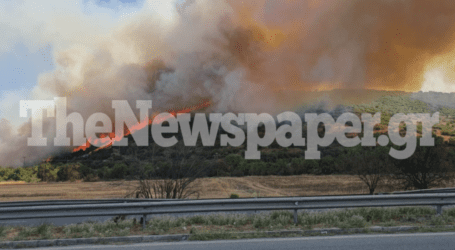 ΤΩΡΑ: Μεγάλη φωτιά έξω από τον Βόλο [εικόνες και βίντεο]