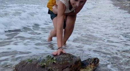 Η Δωροθέα και η θαλάσσια χελώνα