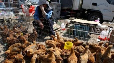 Επιβεβαιώθηκε ένα κρούσμα μόλυνσης από τη γρίπη των πτηνών