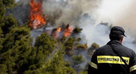 Πυρκαγιά στην Κάρυστο Ευβοίας κοντά σε κατοικημένη περιοχή