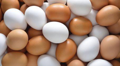 Αποσύρεται βιολογικό κοτόπουλο και χιλιάδες βιολογικά αυγά