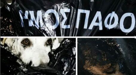 Έλουσαν με πίσσα σκυλάκια και τα πέταξαν ζωντανά στα σκουπίδια