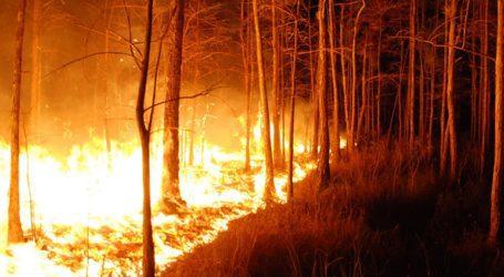 Λίβανος: Καταστροφικές πυρκαγιές στο βόρειο τμήμα της χώρας