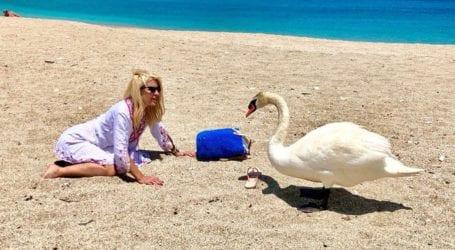 Ελένη Μενεγάκη: Ποζάρει στον φακό φορώντας animal print μπικίνι και εντυπωσιάζει!
