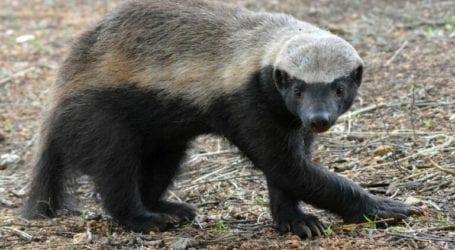 Αυτό είναι το πιο επικίνδυνο ζώο του πλανήτη – Το ξέρουν ελάχιστοι!