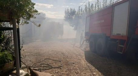 Φωτιά έκαψε βοσκοτόπια στο Σέσκλο