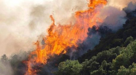 Μεγάλη πυρκαγιά στους Κωφούς Αλμυρού – Επιχειρούν εναέρια μέσα [βίντεο]
