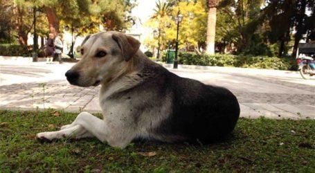ΑΣΠΙΔΑ ΚοινΣΕπ: Σήμανση ζώων που ανήκουν σε ευάλωτες ομάδες πολιτών