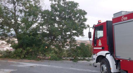 Βελεστίνο: Πολλές πτώσεις δέντρων από το μπουρίνι – Δείτε εικόνες