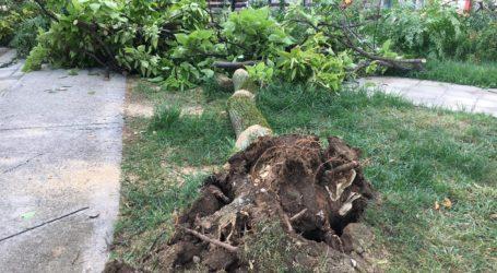 Οι καταστροφές στη Λάρισα στο φως της ημέρας – Συντρίμμια άφησε πίσω του το μπουρίνι – Όλη η Πυροσβεστική στους δρόμους (Δείτε φωτογραφίες)