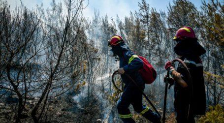 Λάρισα: Νέα πυρκαγιά στην Ανατολή Αγιάς – «Την προλάβαμε…», λέει η Πυροσβεστική