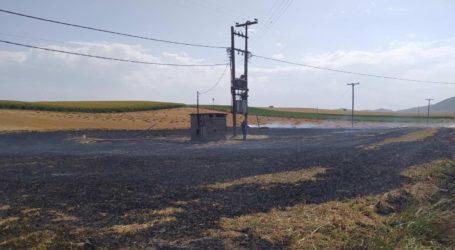 Μαγνησία: Στις φλόγες υπολείμματα καλλιεργειών στον Άγιο Δημήτριο