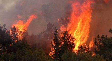Σε επίπεδο «Κόκκινου Συναγερμού» η Κύπρος για τις δασικές πυρκαγιές
