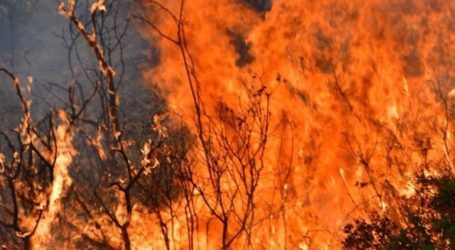 Ένας νεκρός από τις δασικές πυρκαγιές στο Αργυρόκαστρο