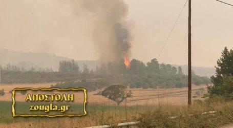 Μάχη για να σωθούν στις Κεχριές στην Εύβοια