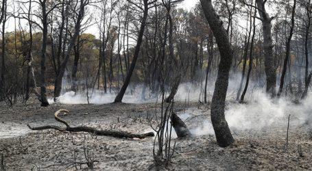 Ο δασολόγος Στυλιανός Καραπουρναλίδης εστιάζει στα αίτια των καταστροφών
