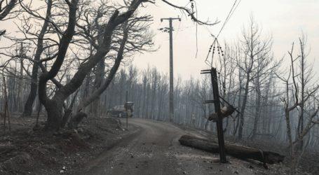 Η καμένη έκταση στην Ελλάδα φέτος ξεπερνά τα 930.000 στρέμματα