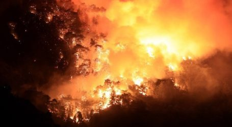Τέσσερις νεκροί από τις δασικές πυρκαγιές στην Αλγερία