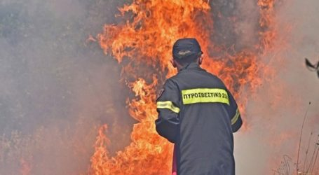 Περισσότερες από 40 παλέτες με είδη πρώτης ανάγκης αποστέλλει ο δήμος σε πυρόπληκτες περιοχές