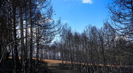 Στις 77 οι πληγείσες επιχειρήσεις από την μεγάλη πυρκαγιά στη Βαρυμπόμπη