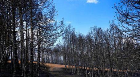 Είδη πρώτης ανάγκης από τον Δήμο Ιλίου για τους πληγέντες από τις πυρκαγιές