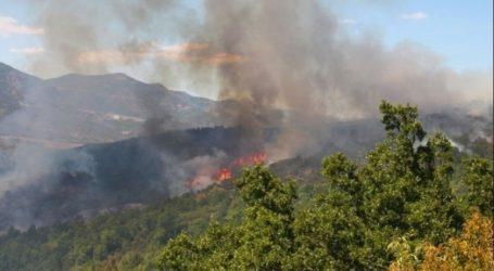 Σε εξέλιξη φωτιά στην περιοχή Δρυάλια Λακωνίας