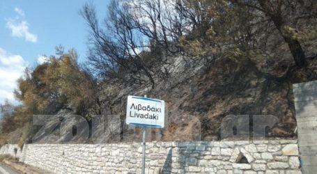 """Καλώδια ηλεκτρικού ρεύματος """"ξεπηδούν"""" από τα ακαθάριστα δένδρα καμένου χωριού στη Γορτυνία"""