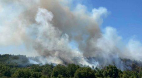 Πάνω από 100 στρέμματα δασικής έκτασης έκαψε η φωτιά στη Νυμφαία
