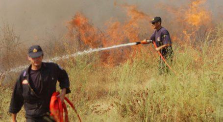 Πυρκαγιά στον Ριζόμυλο – Έκαψε ξερά χόρτα