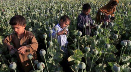 Αφγανιστάν – Οι τεράστιες ποσότητες οπίου, οι υποσχέσεις των Ταλιμπάν και τα κέρδη-μαμούθ από τα ναρκωτικά
