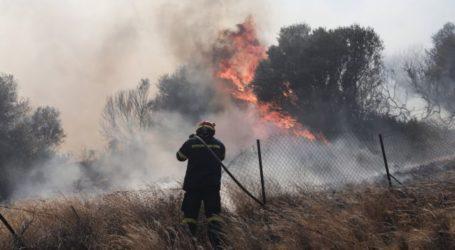 Υπό μερικό έλεγχο η πυρκαγιά στο Μαρκόπουλο Αττικής