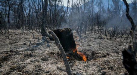 Τριάντα τέσσερις δασικές πυρκαγιές το τελευταίο 24ωρο