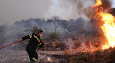 Πήλιο: Πυρκαγιά σε οικόπεδο στον Πλατανιά