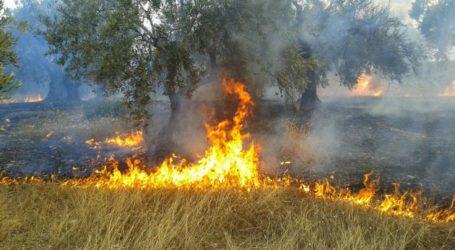 Φωτιά στην Ν. Αγχίαλο έκαψε ελαιόδεντρα