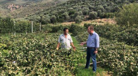 Κόκκαλης σε πληγέντα χωριά του Τυρνάβου: Άμεσα δίκαιες εκτιμήσεις και αποζημιώσεις στους αγρότες