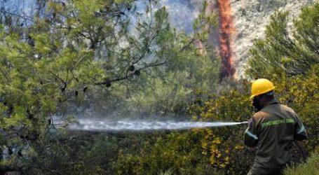 Αποκάλυψη: Τρεις Δήμοι της Μαγνησίας χωρίς σχέδιο εκκένωσης σε περίπτωση πυρκαγιάς