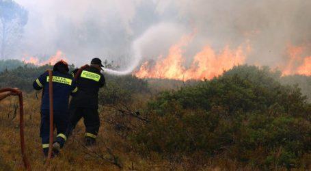 Βόλος: Φωτιά στο Φυτόκο – Άμεση η παρέμβαση της Πυροσβεστικής