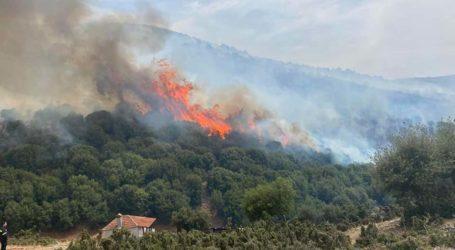 Λάρισα: Υπό έλεγχο οι πυρκαγιές σε Σαραντάπορο και Ανατολή – Επτά τα «μέτωπα» στη Θεσσαλία