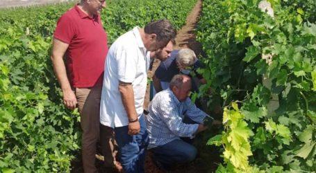 Δήμος Τυρνάβου: Τεράστιες ζημιές στην αγροτική παραγωγή – Επί τόπου κλιμάκιο του ΕΛΓΑ